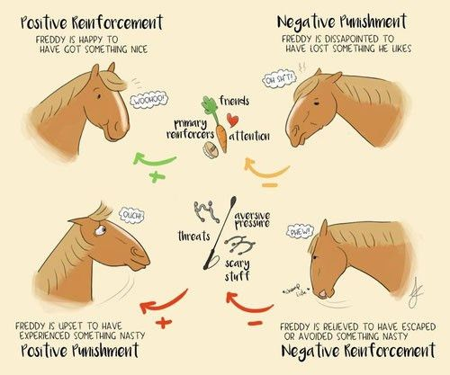 What is positive reinforcement training? - FairHorsemanship