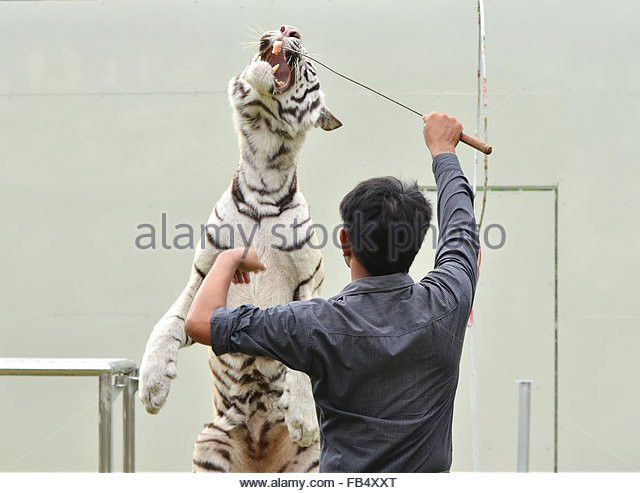 Tiger Zoo Keeper Stock Photos & Tiger Zoo Keeper Stock Images - Alamy
