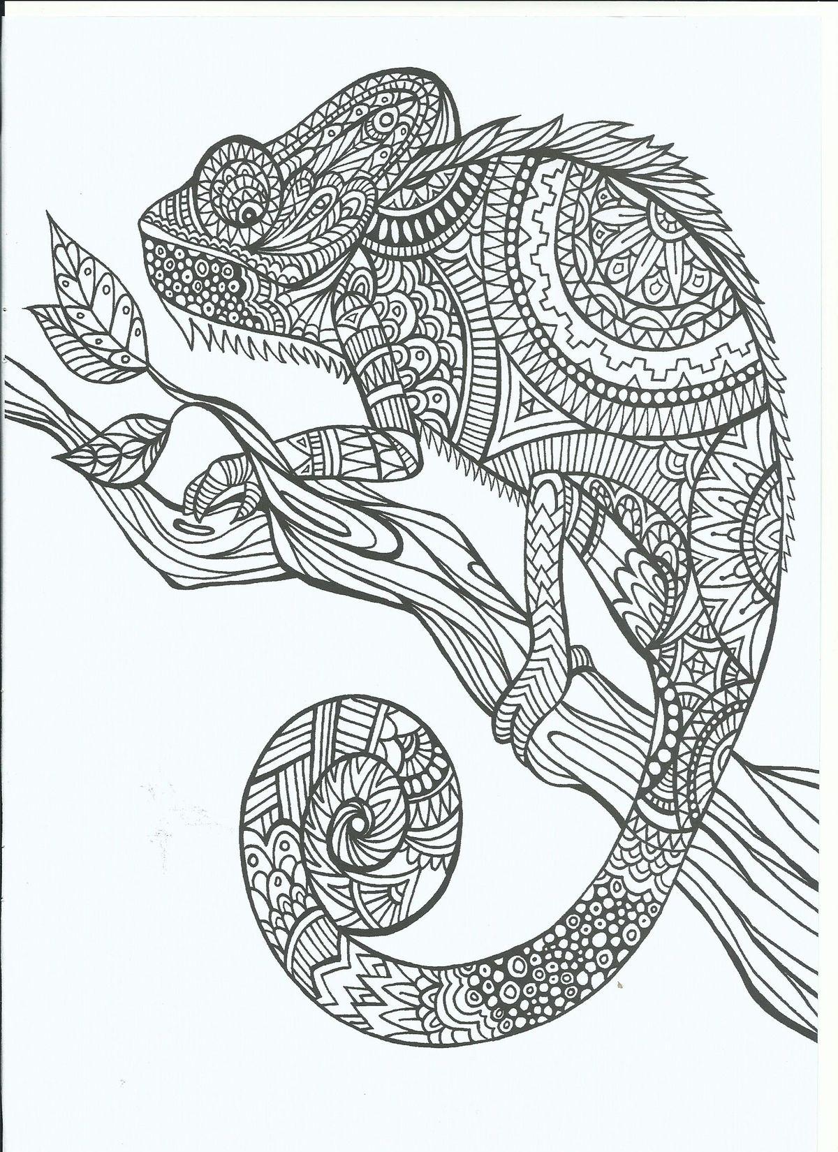 ff24a898a50d43fa16fe97e3947a15e6.jpg 1.200×1.650 píxeles | dibujos ... - Chameleon Coloring Pages Printable