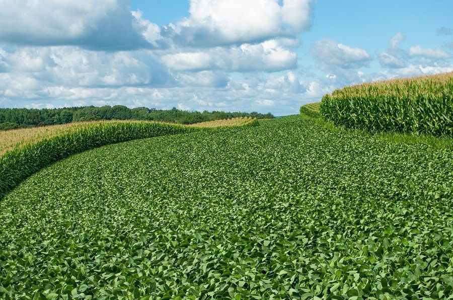 Mono-Cropping with Government Subsidized Soy and Corn a Threat to ...