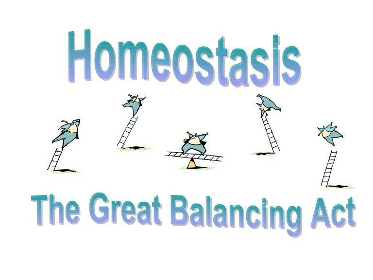 Homeostasis 4 themes ppt