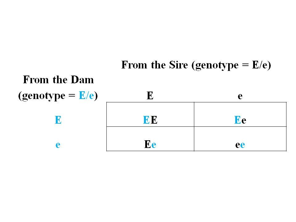 A Punnett Square: A tool to help manage simple genetic traits   TREG