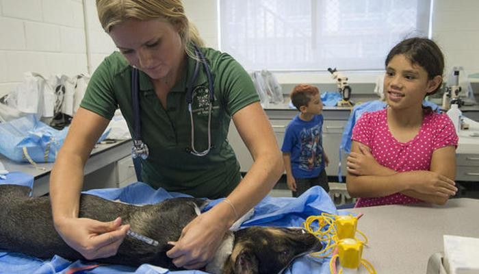 How to Answer the Top 10 Veterinary Nurse Questions