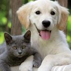 Cats & Dogs Pinterest Account