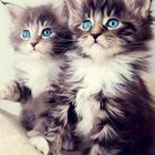 MeowMoe Pinterest Account