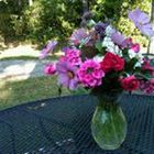 Sharon Tolbert Pinterest Account