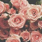 Hadeel Anani Pinterest Account