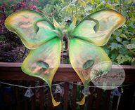 Fairy Wings Large Fa