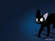 Gigi le petit chat n