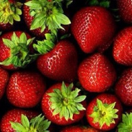 Strawberry Season is