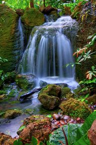 Waterfall in Tropica