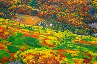 Fall Colors (aerial)