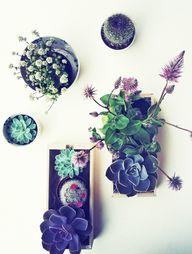 Indoor gardening | L