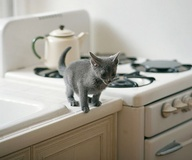 Kittens in the kitch