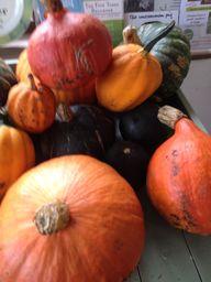 Edible pumpkins & sq