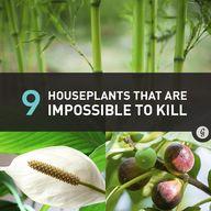 9 Houseplants That A