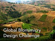Global Biomimicry De