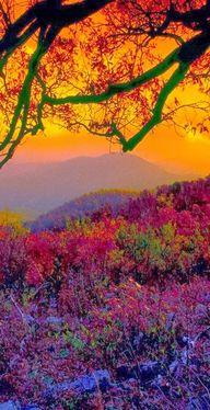 Autumn with sunset