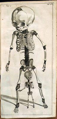 Spicilegium Anatomic