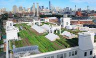 Visit rooftop garden
