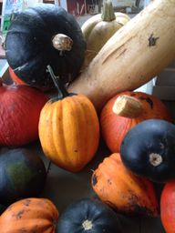 Edible squashes & pu