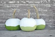 ombre pumpkins - An