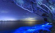 Bioluminescenza: Ste