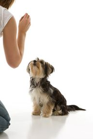 Start leash training