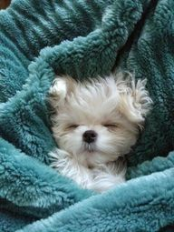 so snuggly...