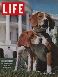 Προεδρικοί σκύλοι....