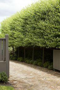 garden by peter fudg