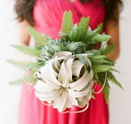 Air Plant bouquet by