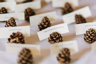 mini pinecone escort