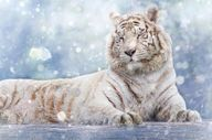 Let it snow! by Alid