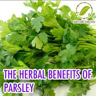 Parsley and Its Herb