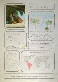 Animal Notebooking P