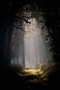 Forest path....yes t