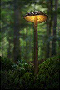 Mushroom, Lamp