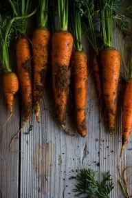 carrots www.afrodite