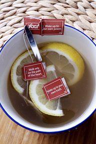 yogi and lemon te