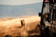 Our safari Land Rove