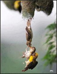 Amazing photo captur