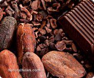 Raw cacao beats proc
