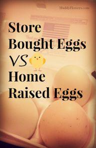 store bought eggs vs