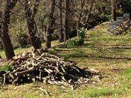 pruned olive logs wa