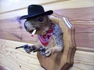 Taxidermy cowboy squ