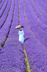 Lavender walk Live a