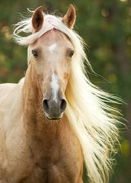 Whispering Plains (Horse & Human RP) 48cbebf36596e00b1a891fc6a8fa0b8d