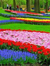 Keukenhof Gardens -