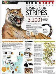 Tigers are disappear